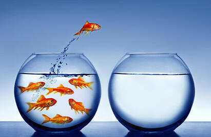 goldfish_jumping_from_inspiration_101710809
