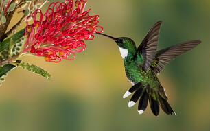 Link building services hummingbird