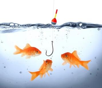 goldfish_getting_caught